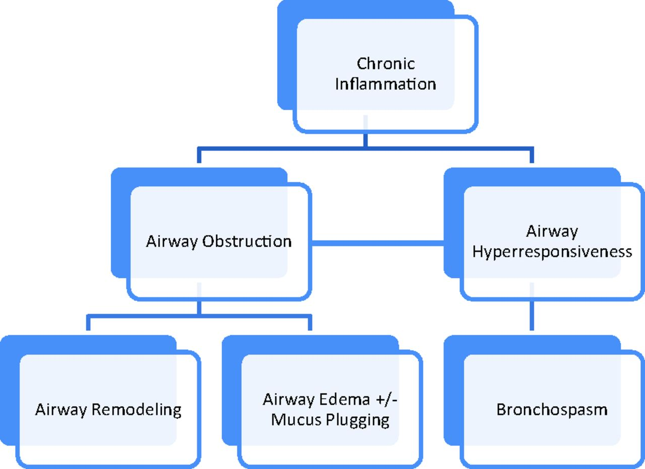 Asthma  Chronic Obstructive Pulmonary Disease  Copd   And